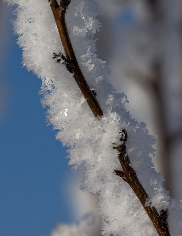 Ice Crystals On Branch