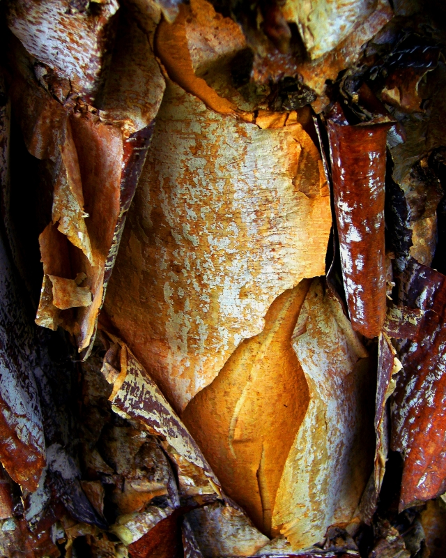 Bark Abstract #3