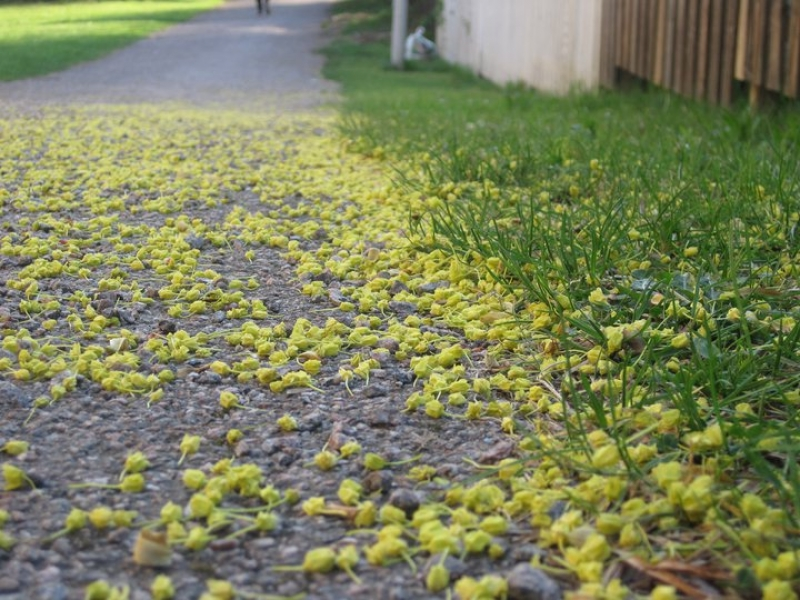 """""""a Path Full Of Flowers.. Yet Not Life"""""""