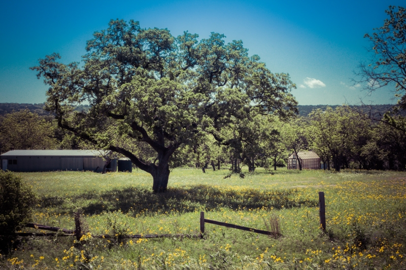 Hill Country In Bloom