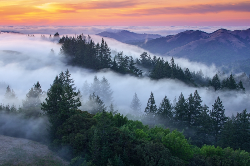Sunset Fog, Northern California