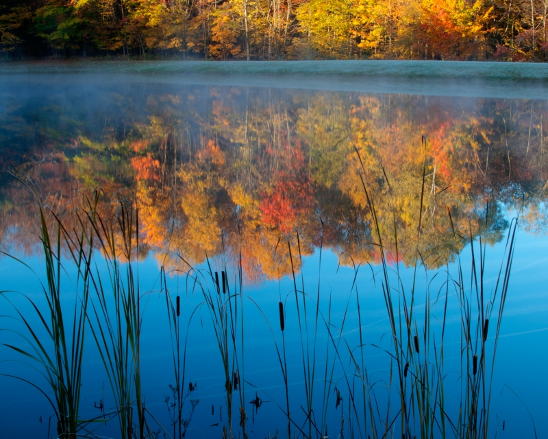 Cattails And Fall Colors