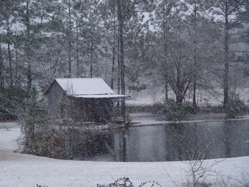 Snowing In Sylvester