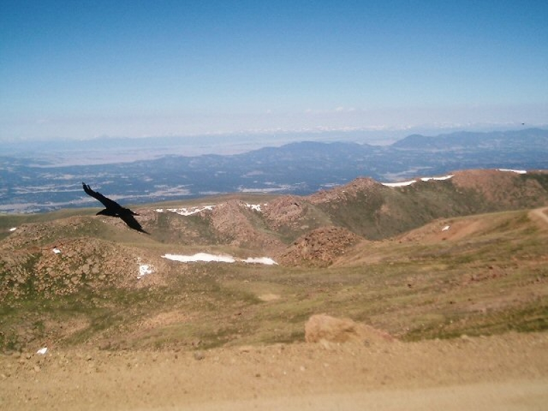 Bird Atop Pikes Peak