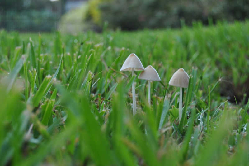 Early Morning Mushrooms