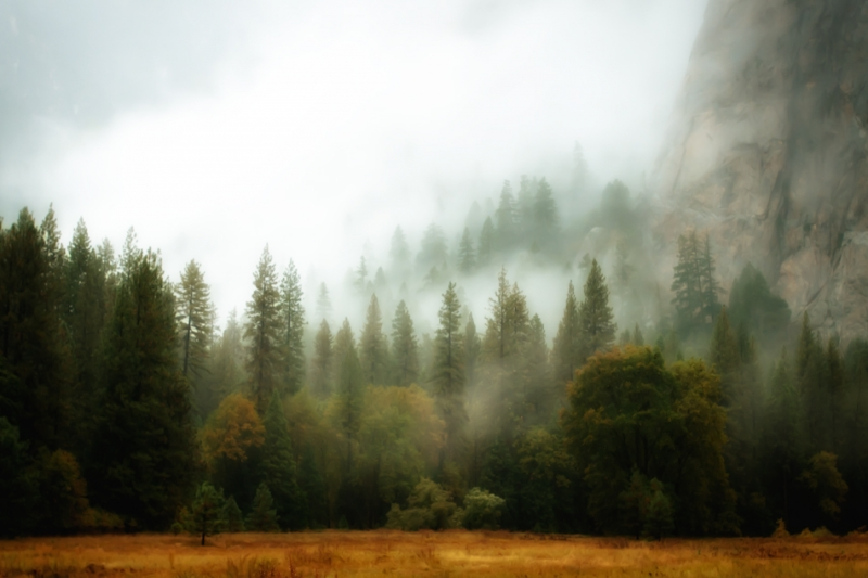 Misty Morning, Yosemite National Park