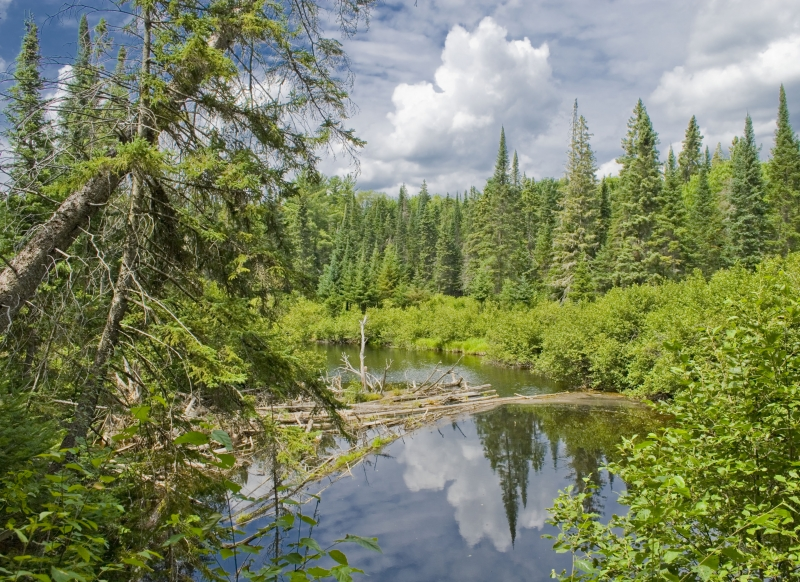 An Algonquin National Park Day