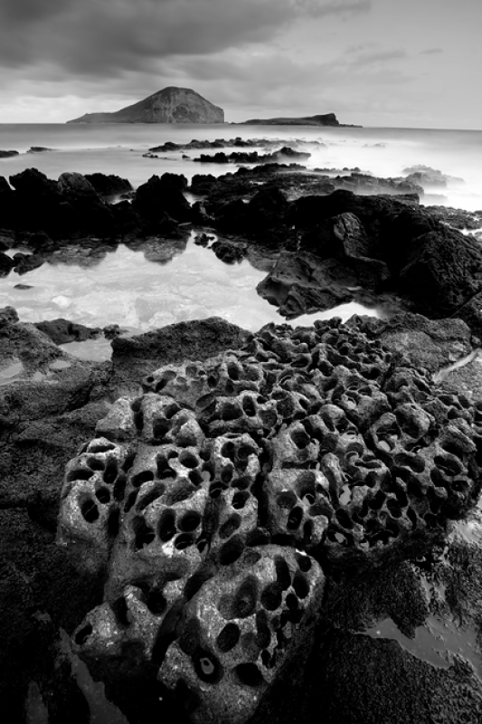 Porous Lava Rock, Oahu, Hawaii