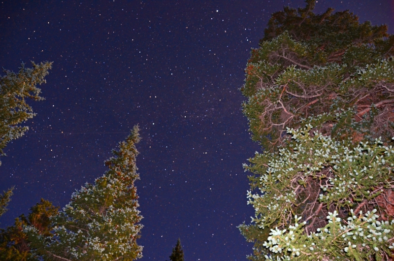 Starscape And Pines
