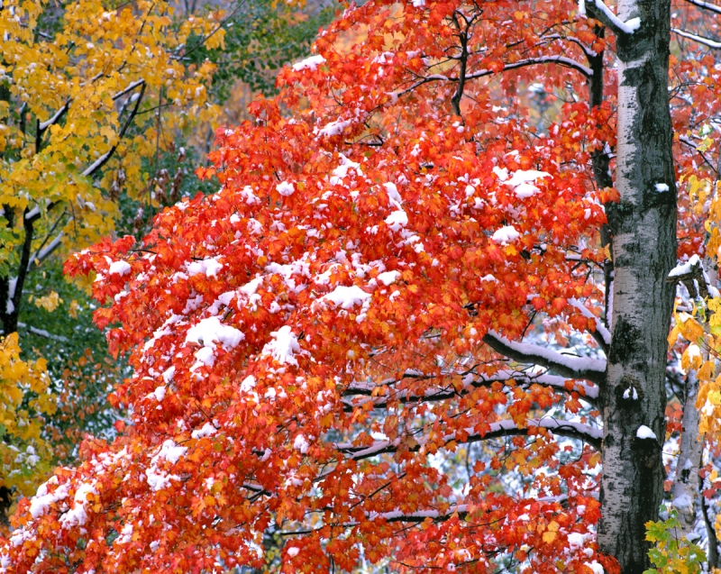 New Hampshire Autumn Snow