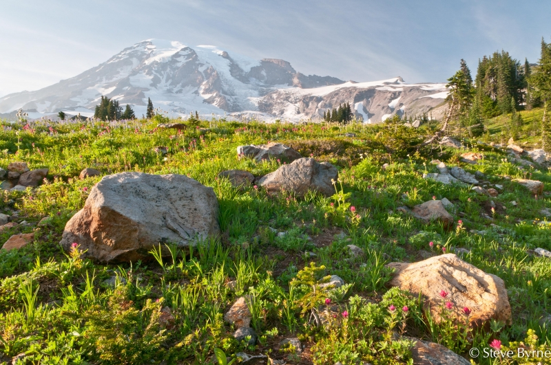 Mt. Rainier, Stones And Meadow.