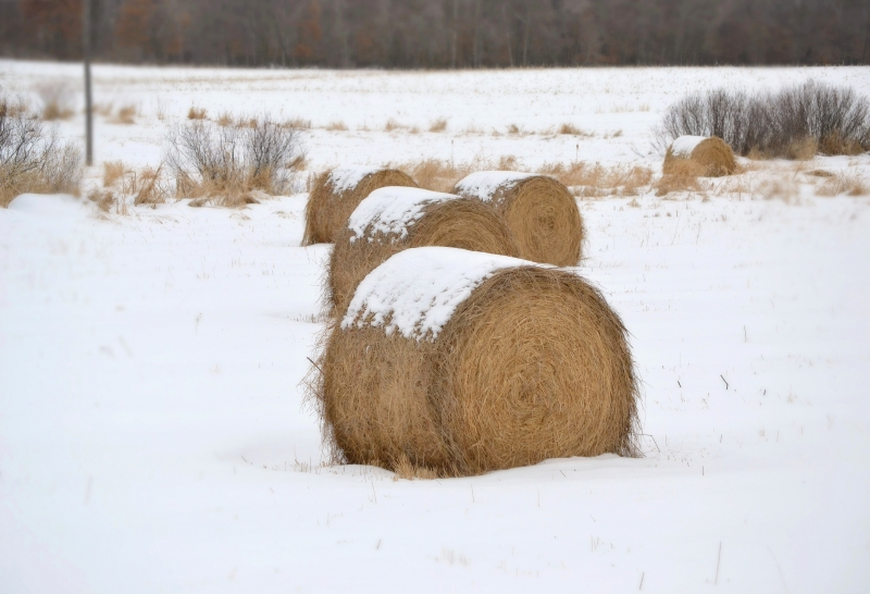 Round Bales In The Smow