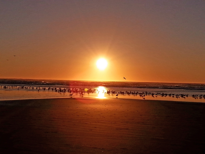 Beach Birds At Sunset