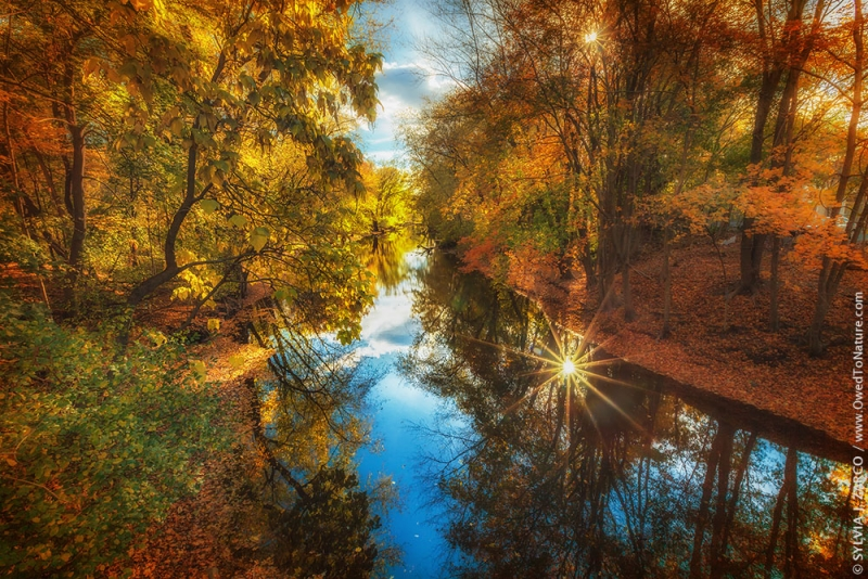 Fall Filtered Reflections
