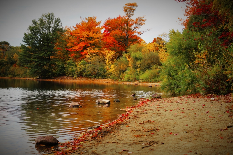 Fall Hike At Straw Pond