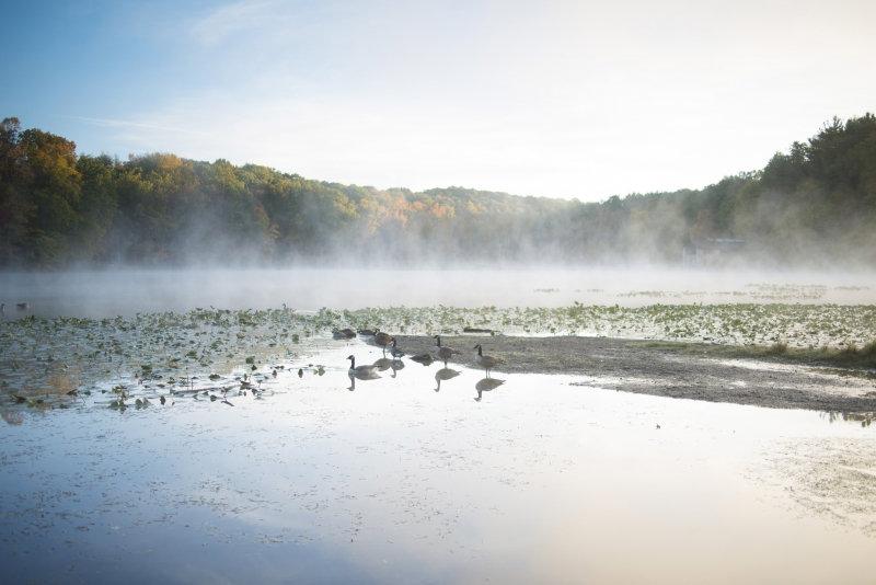 Geese In A Foggy Lake: Virginia Kendall Lake – Cuyahoga Valley National Park