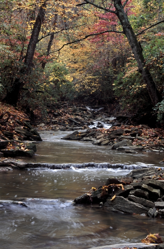 Creek In Autumn