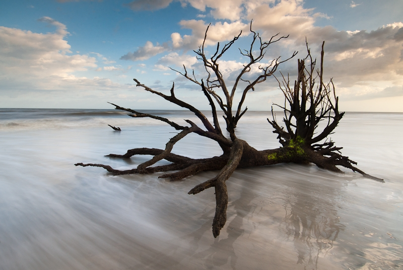 Botany Bay Boneyard Beach