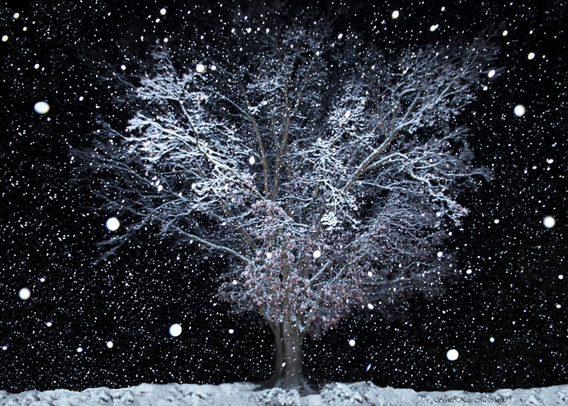 Snowfall At Night