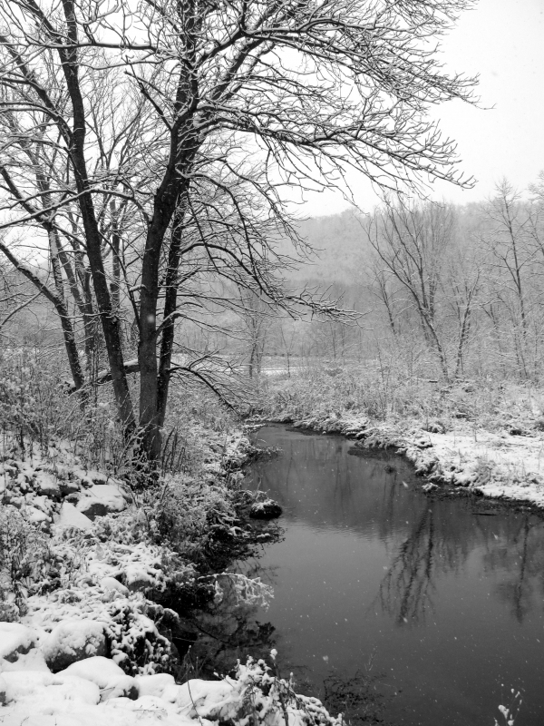 Early Winter By The River