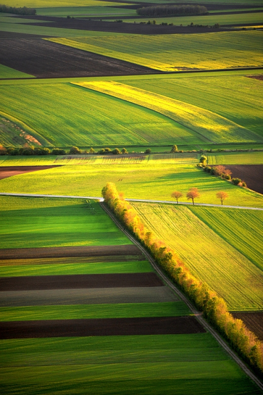Fields Of Colours