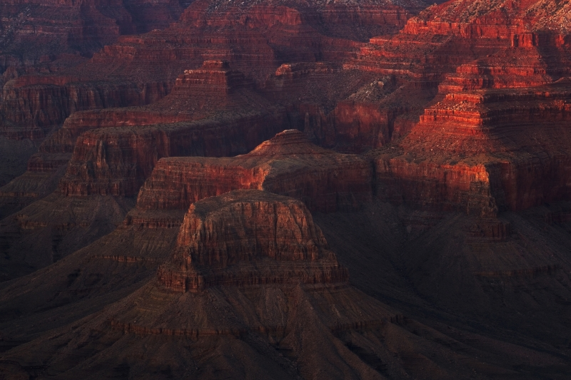 Canyon Reds