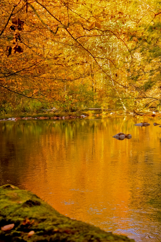 Golden Reflection On The River