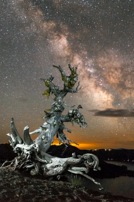 Milky Way And White Bark Pine