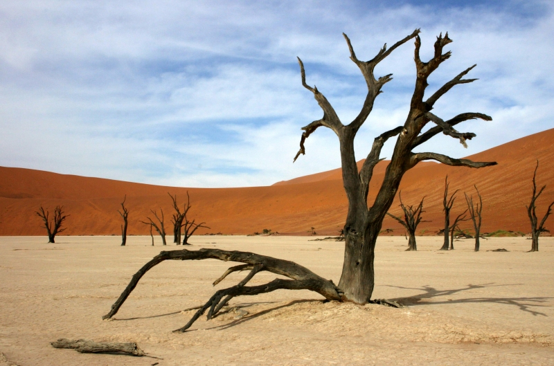 Tree In The Dead Vlei Area