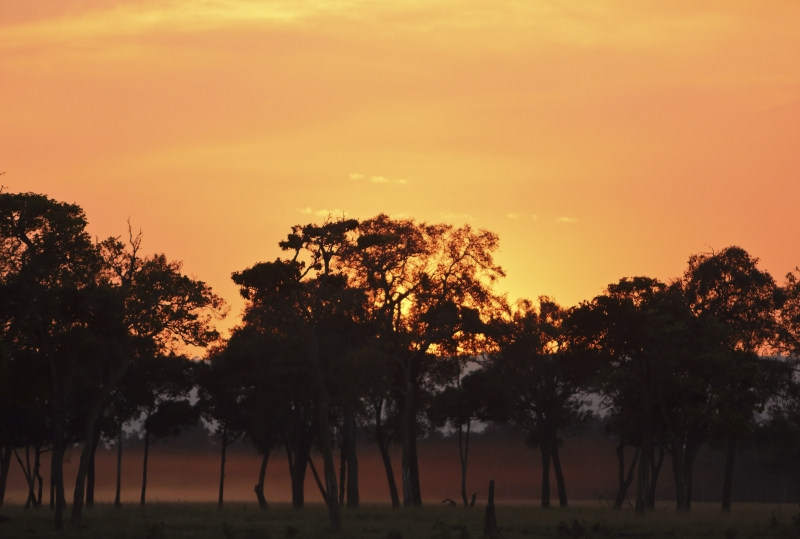 Evening In The Mara