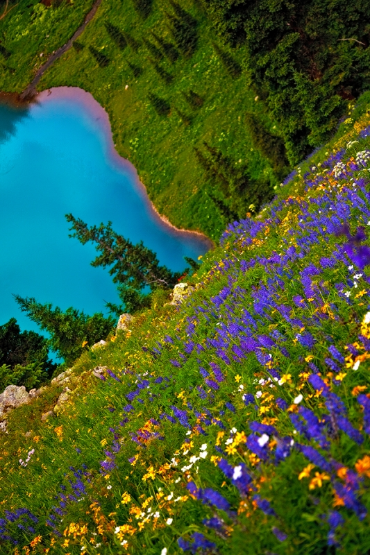 Wildflowers Over Blue Lake