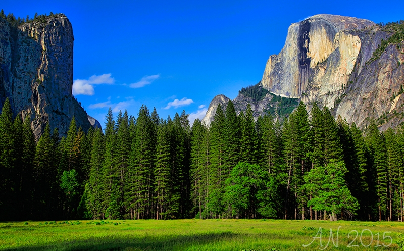 Summer Forest Under Half Dome