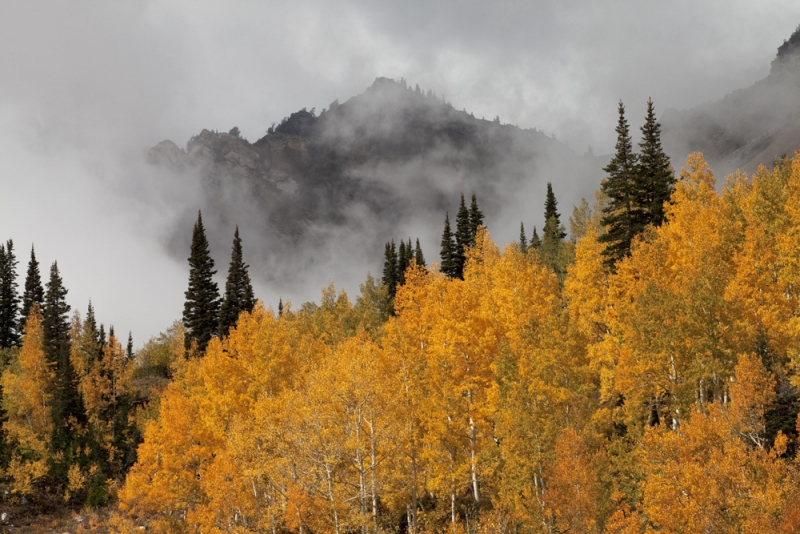 Stormy Little Cottonwood