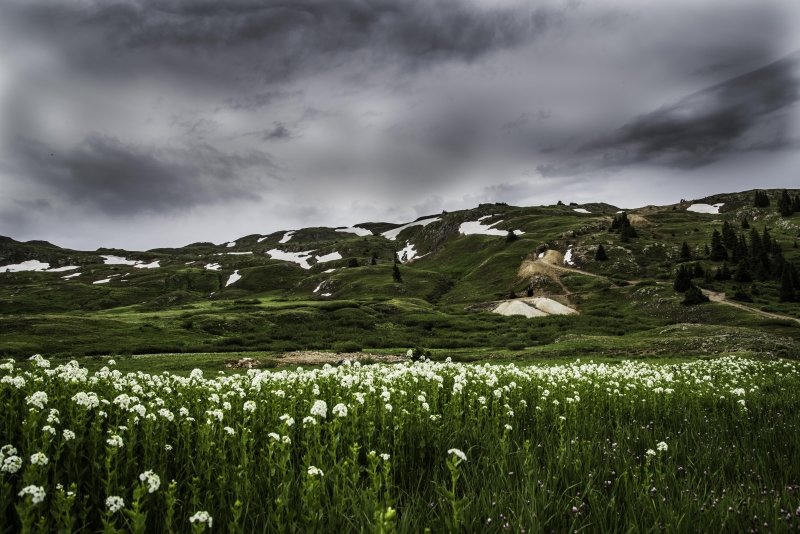 Flowers At 11,000 Feet