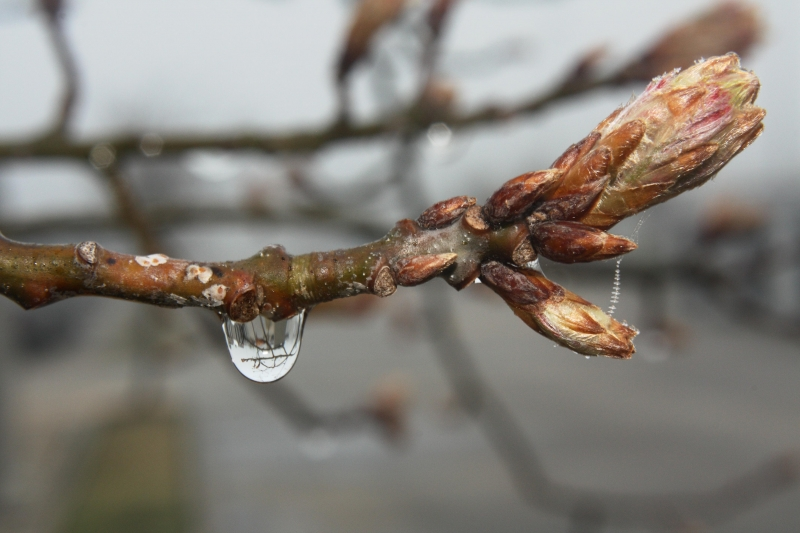Branch On A Rainy Day