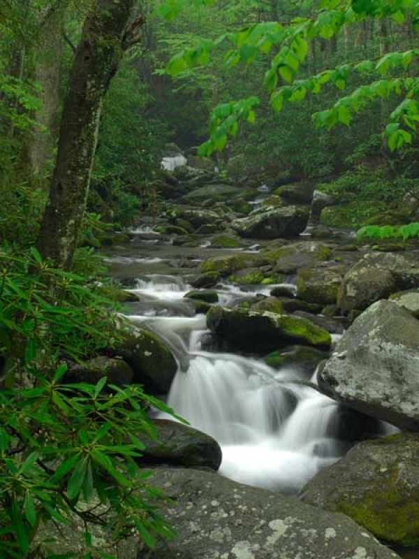 Smoky Mountain Cascade