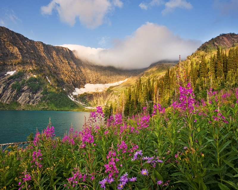 Fireweed And Koessler Lake