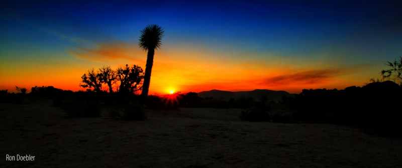 Joshua Tree Sunrise 2012