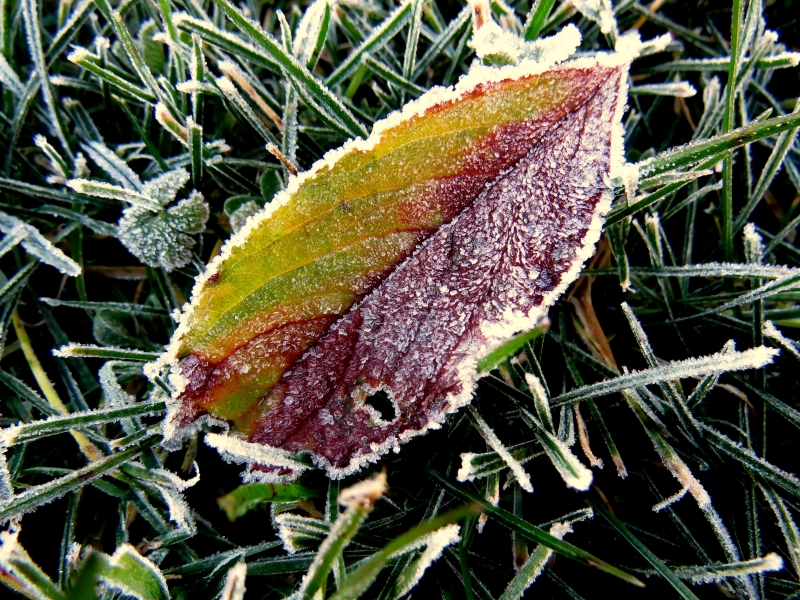 Four Season Leaf