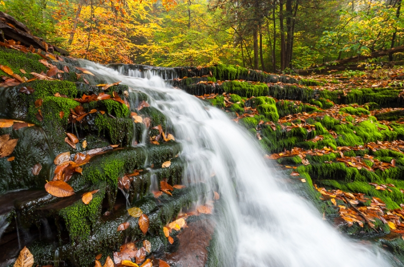 Ricketts Glen State Park Autumn Pennsylvania Waterfall