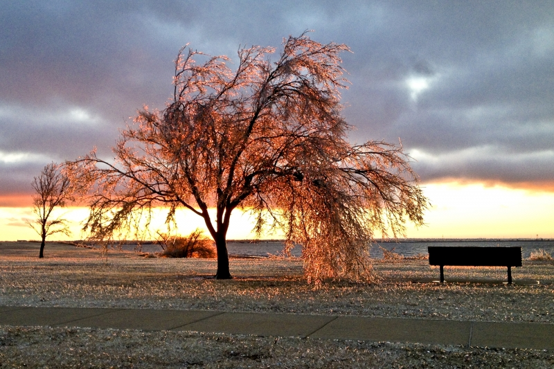 Icy Tree At Sunset