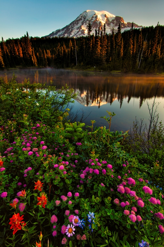 Wildflowers, Reflection Lake, Mt. Rainier