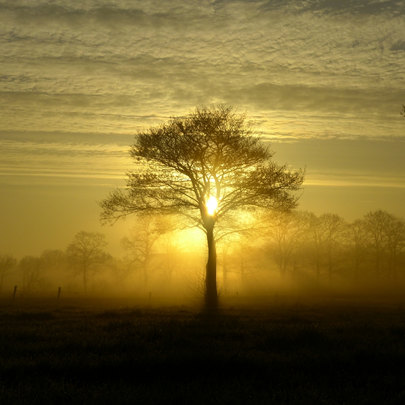 Early Morning In Rural Netherlands