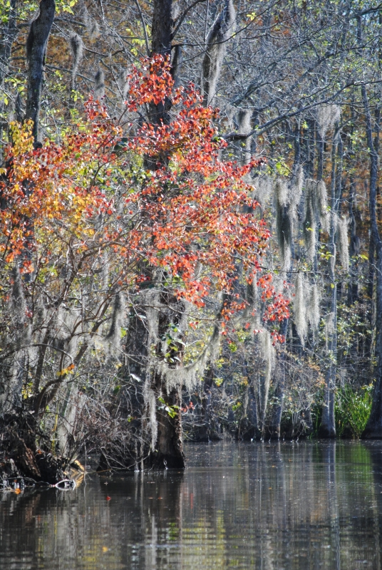 Fall In The Swamps Of Louisiana