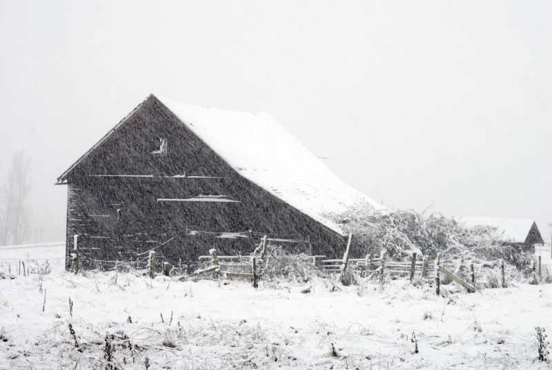 Barn In Driving Snow
