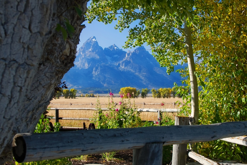 Window To The Tetons