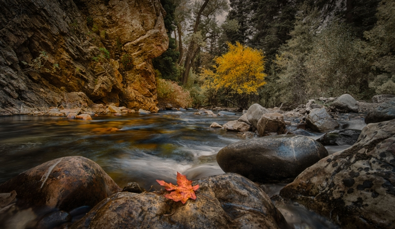 Maple Leaf In Big Cottonwood Canyon Stream