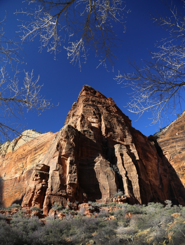 Winter Trees – Zion