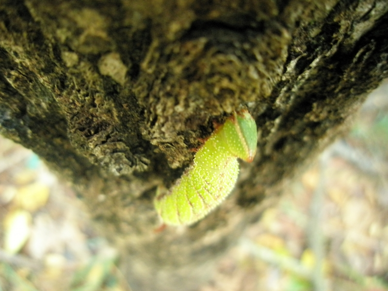 Caterpiller On Tree