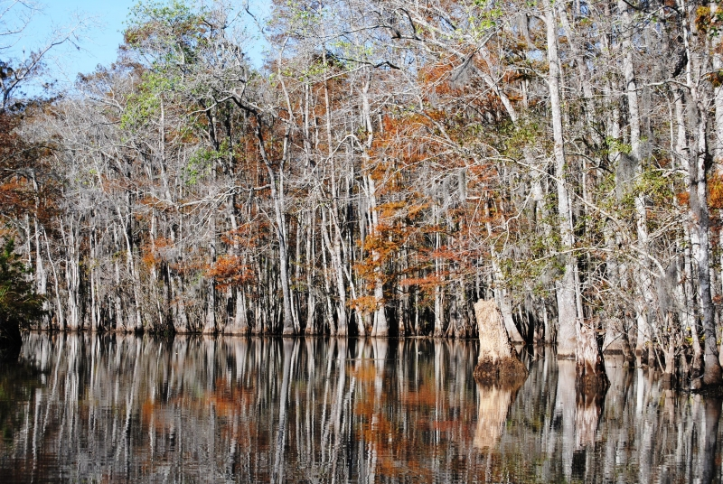 Reflections Of Fall In The Cypress Forest